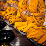 A line of Buddhist monks in orange robes, sitting in prayer position.