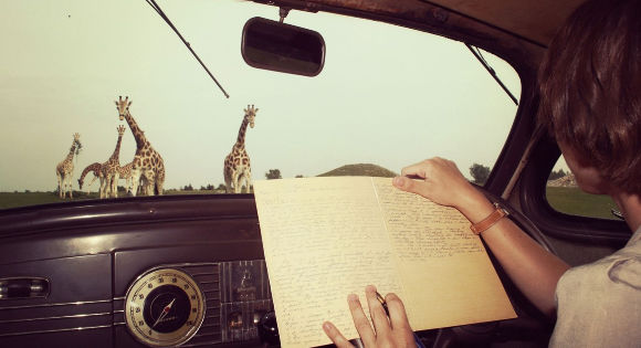 Anne Innis Dagg taking notes in a car while watching giraffes.