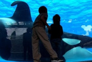 A scene from Blackfish