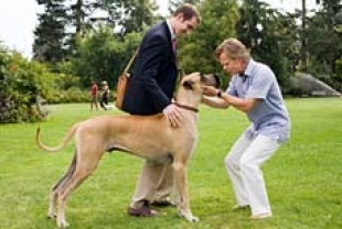 Owen Wilson as Marmaduke, Lee Pace as Phil, and William H. Macy as Don