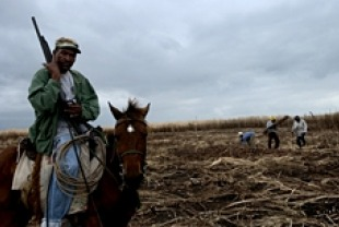 Armed Guard at the Dominican Republic Sugar Cane Fields
