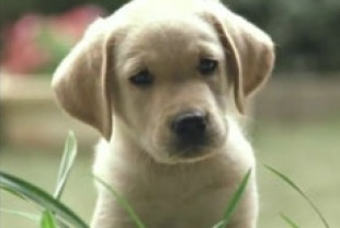 Quill as a puppy